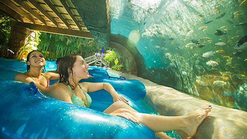 Loggerhead at Aquatica Orlando