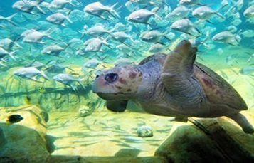 Turtle Reef at SeaWorld San Antonio