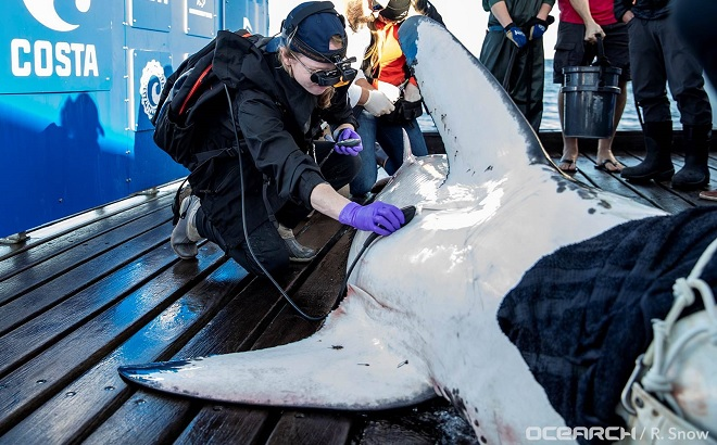 Molly Martony aboard an expedition with OCEARCH, a partnership withSeaWorld