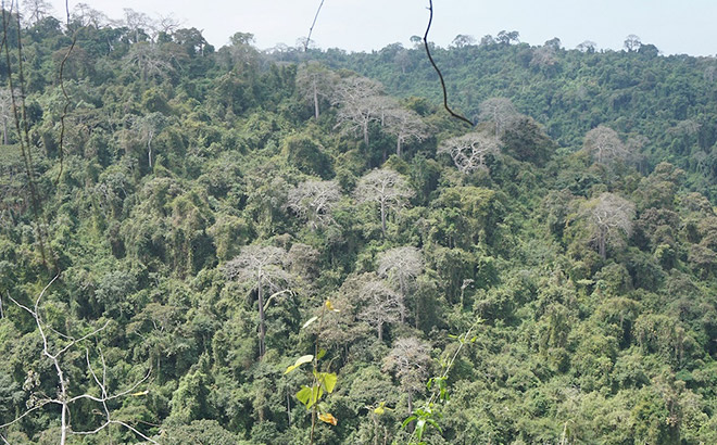 Cerro Blanco Protected Forest