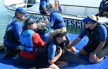SeaWorld volunteers rescuing tangled dolphin