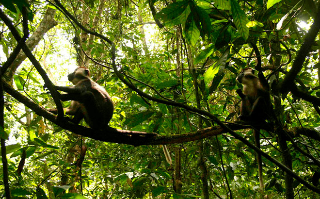 Monkey sitting in tree in rainforest