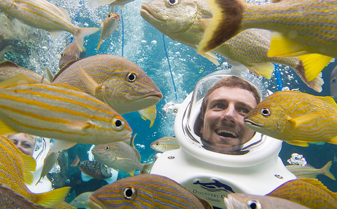 Scuba diver and yellow fishes