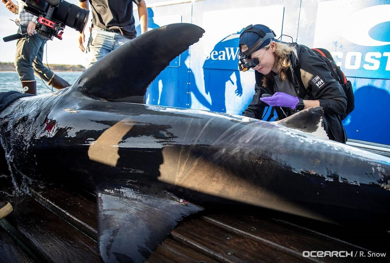 Molly is a research scientist on an expedition in Nova Scotia with OCEARCH