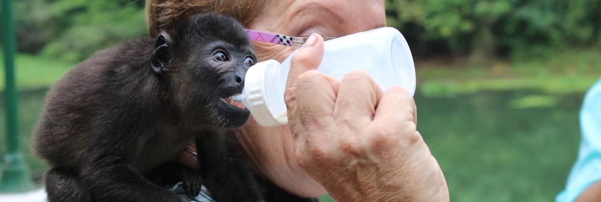 Feeding a baby monkey food through a bottle
