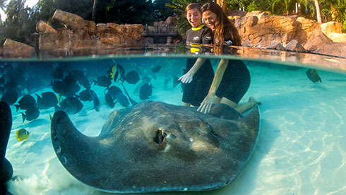 Discovery Cove in Orlando Florida