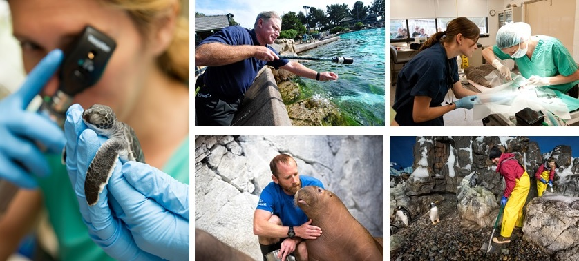 Various images showing the practices of animal care at SeaWorld