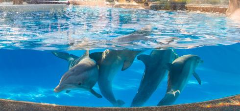 Dolphin Nursery