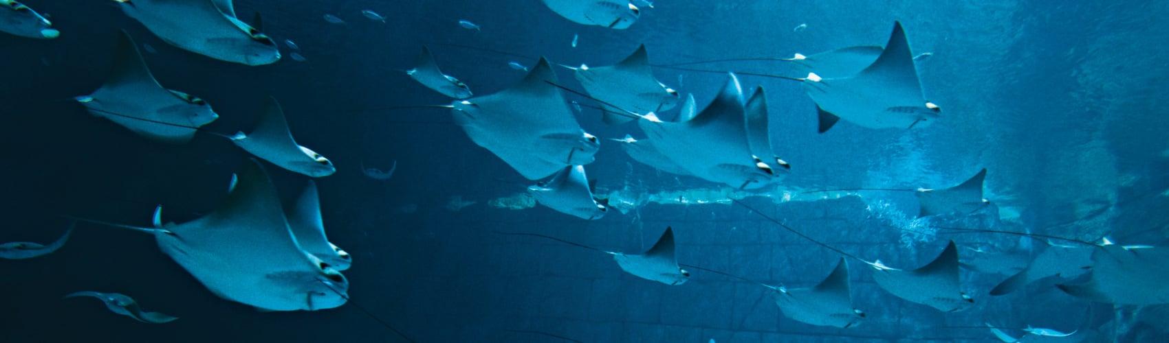 Manta Aquarium at SeaWorld Orlando
