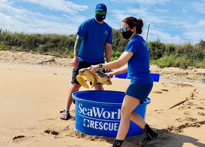 SeaWorld Rescue Team releasing rehabilitated sea turtles back to the ocean