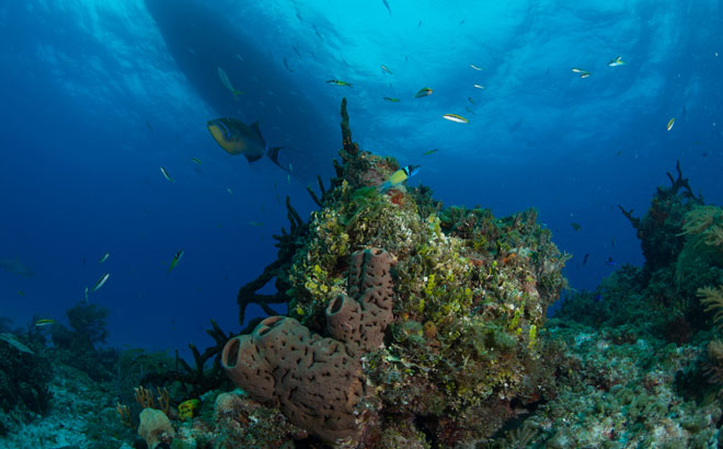 Wild Coral