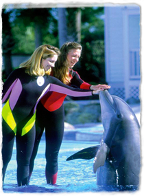A dolphin rises out of the water to touch its head to the outstretched hands of two trainers standing on the side of the pool.