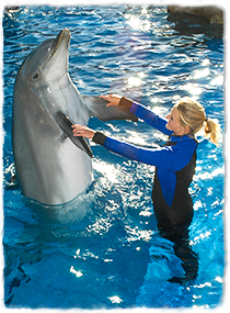 A trainer standing in a pool holds a dolphin's pectoral flippers while training.