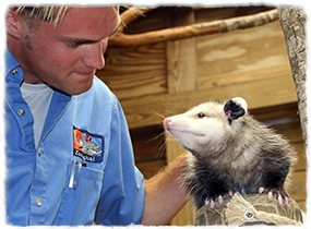 A trainer pets an opossum during a relationship session.