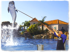 A trainer holds a target pole high over the water and a dolphin jumps to meet it.