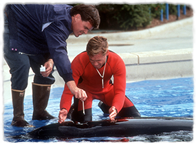 Two veterinarians collect a culture sample from an animal's blow hole in a shallow pool.