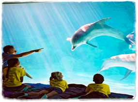A group of children lie on sleeping bags watching dolphins through the glass wall of a tank.