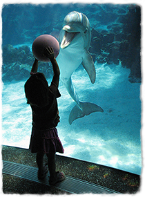 A child holds a ball up to the glass wall of a tank, and the dolphin in the tank looks towards her with mouth open.