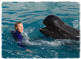 A trainer in a pool interacts with a whale at the surface.