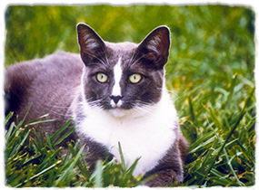 A cat lies in the grass looking toward the camera.