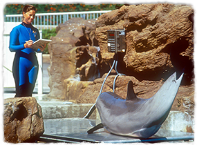 A trainer writes notes while a dolphin sits on a scale.