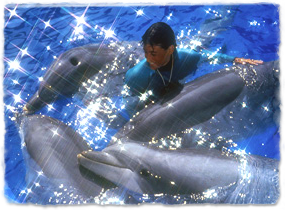 A trainer in the water surrounded by dolphins, petting one.