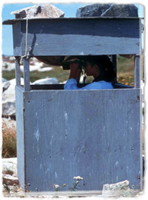 A researcher hiding in a wooden shelter observes using binoculars