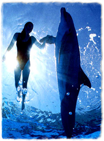 a trainer and bottlenose dolphin side-by-side with the trainer holding the dolphin's pectoral flipper