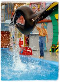 A sea lion airborne in mid jump during a marine park performance. The sea lion is arched backwards with tail almost meeting head, forming a loop shape.