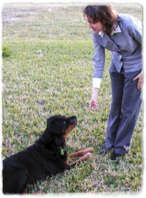 A dog lies in the grass looking up at a trainer giving a hand signal.