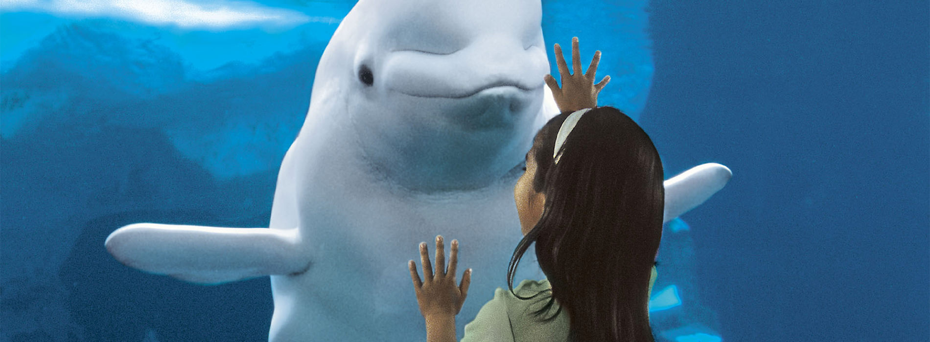 Little girl and beluga whale