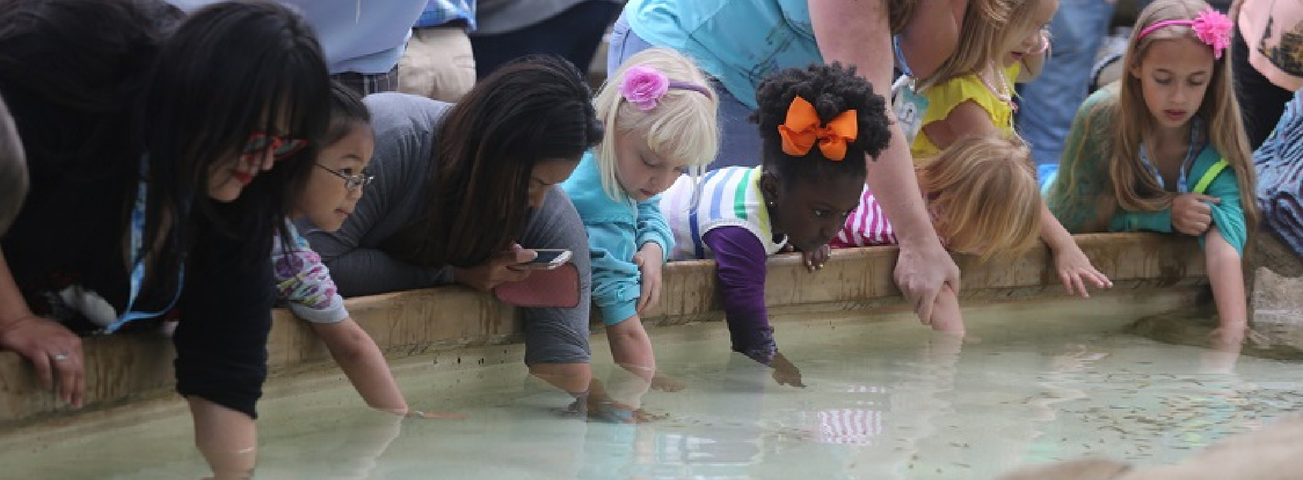 Young children reach into a shallow tank to touch marine life