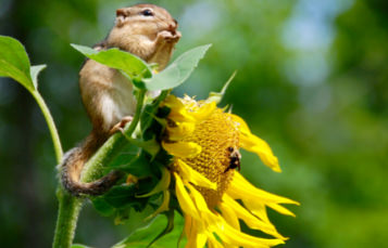 A small squirrel clings to a flower
