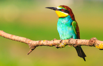 A bird sits perched on a branch