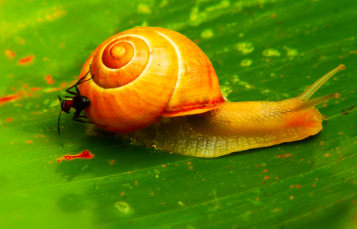 A snail moves across a leaf