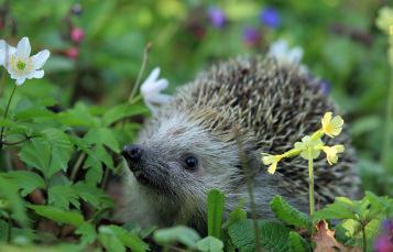 A hedgehog surrounded by vegetation
