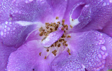 close up photo of the inside of a flower