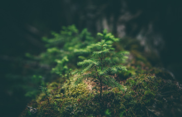 A small tree grows, surrounded by moss