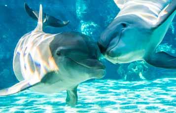 救援过程中的宽吻海豚