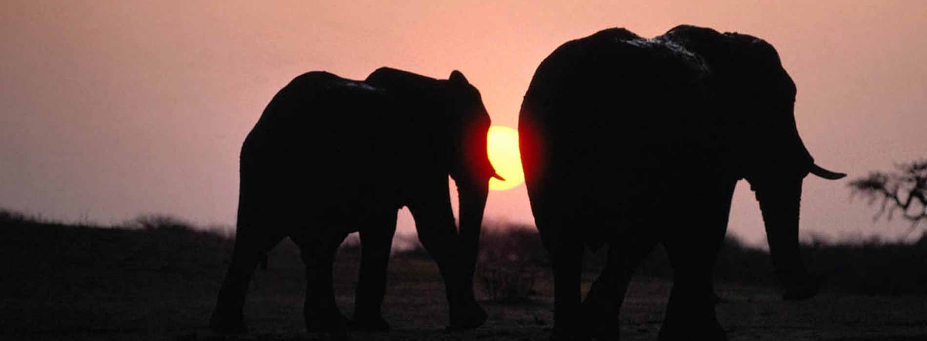 Elephants walking in the sun