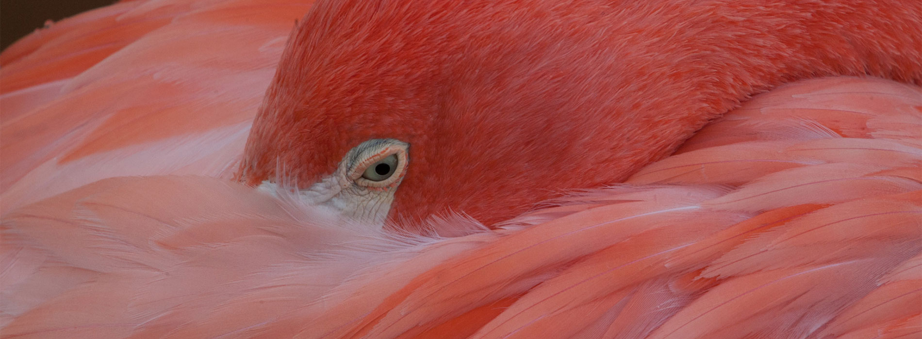 Flamingo snuggle