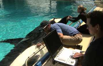 虎鲸与海洋世界教练机和兽医