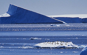 A large group of penguins on an ice floe, with a larger mass of ice visible in the background.