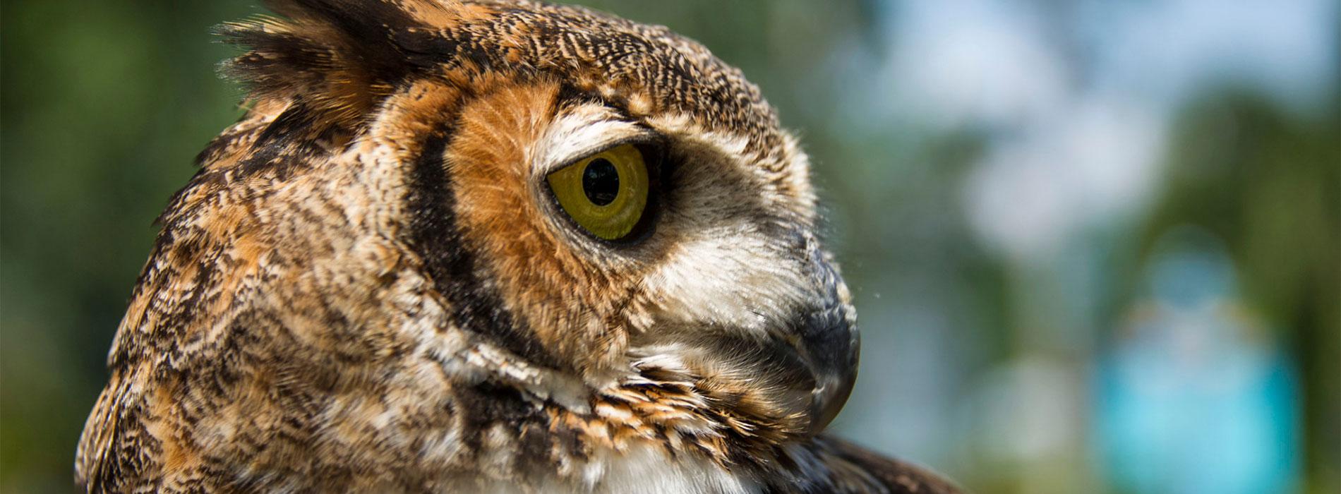 owl side profile