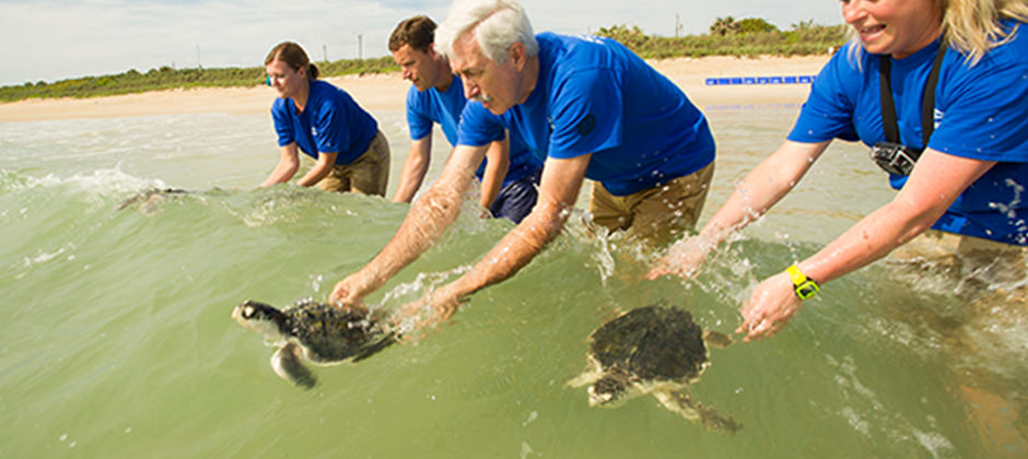 A rescue team releases sea turtles into the water