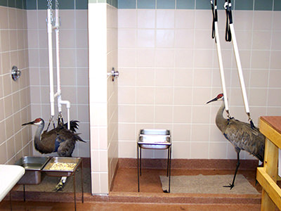 Two birds in a rehabilitation facility
