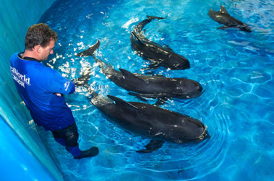 A rescue staff member observes whales in a pool