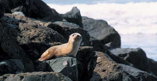 A seal sits on a rock near the water