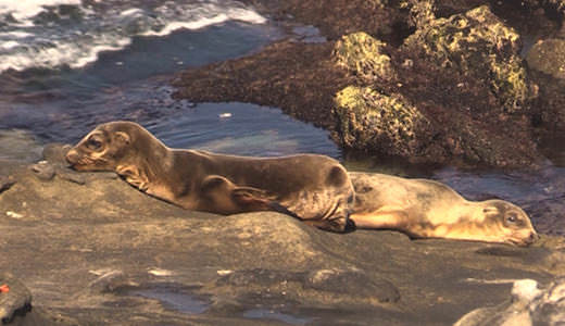 Two stranded young seals