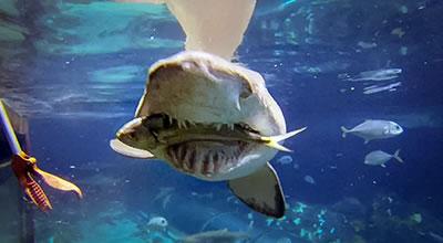 Sharks & Rays - Diet & Eating Habits   SeaWorld Parks & Entertainment